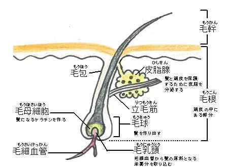 mouhatsu1.JPG